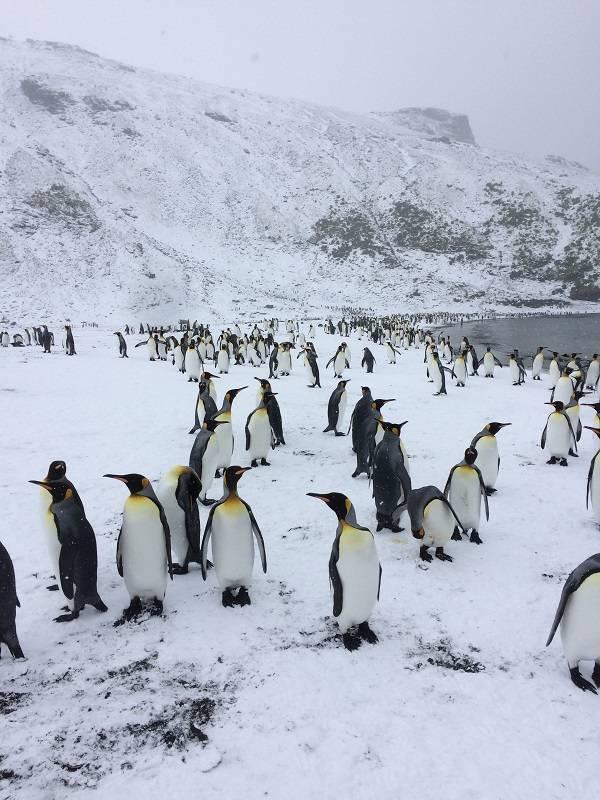 Wetterumschlag, Schnee. Die Pinguine drehen dem kalten Wind den Rücken zu, die Wissenschaftler ziehen sich warm an. Foto: André Welti, TROPOS