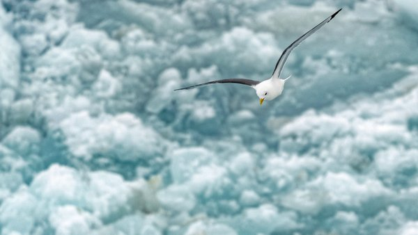 The team uses the trip out of the ice for final work on board: tidying up, documenting and of course preparing the changeover. Birds above the ship announce that the open sea is not far away. Photo: Christian Rohleder, DWD