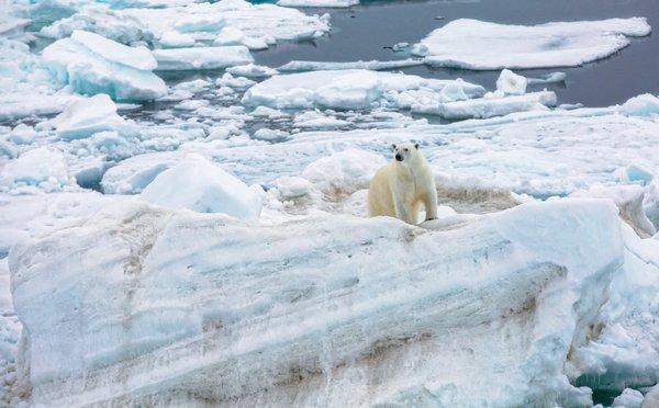 Im Juli bekam das MOSAiC-Team mehrfach Besuch von neugierigen Eisbären. Für die Forschenden hieß das dann: Aus Sicherheitsgründen keine Arbeiten auf dem Eis – bis der neugierige Besucher wieder in der Ferne verschwunden ist. Foto: Lisa Grosfeld, AWI