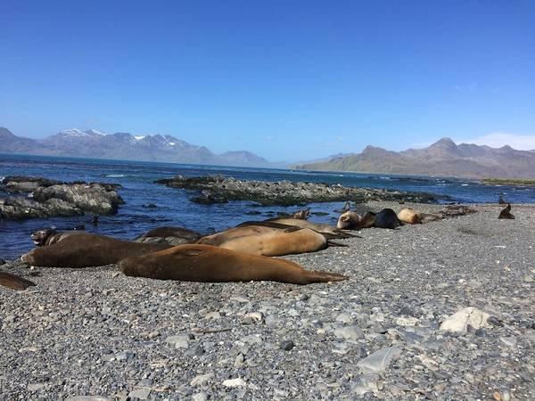 Während die Probensammler laufen nutzen wir die Zeit um die Insel zu erkunden. Seeelefanten (riecht man von weitem) und kampflustige Seehunde tummeln sich entlang der Küste. Foto: André Welti, TROPOS