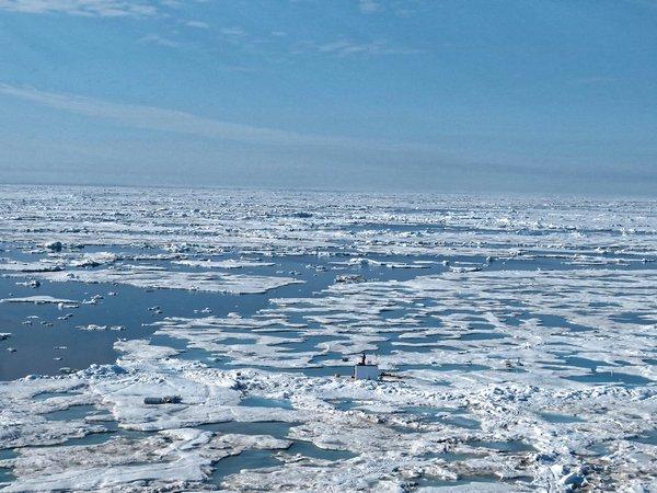Sommer in der Arktis: Die MOSAiC-Scholle schmilzt immer mehr und nähert sich der Eiskante. Die Tage der Scholle sind gezählt … Foto: Luisa von Albedyll, AWI