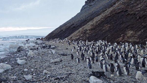 Pinguin-Kolonie am Mt. Siple. Foto: Silvia Hennning, TROPOS
