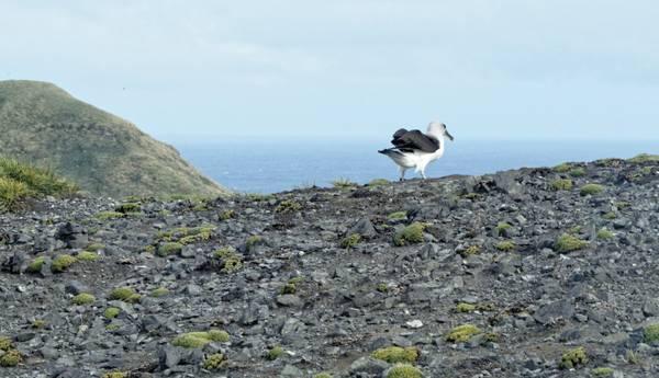 Albatros vor dem Starten. Foto: Silvia Henning, TROPOS