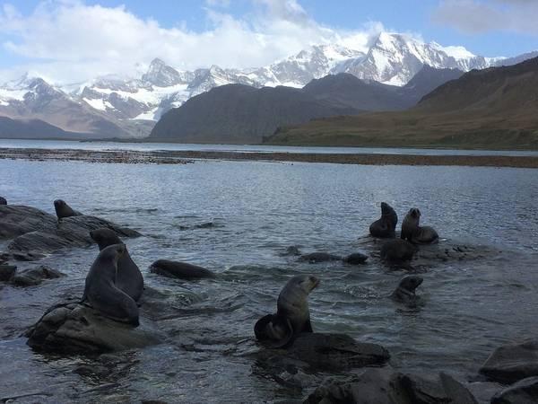 Seehunde, die ihr Revier verteidigen. Foto: André Welti, TROPOS