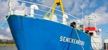 """Dem Projektteam steht der Forschungskutter """"Senckenberg"""" des Wilhelmshavener Senckenberg Instituts zur Verfügung. Foto: Dr. Oliver Wurl/ ICBM"""