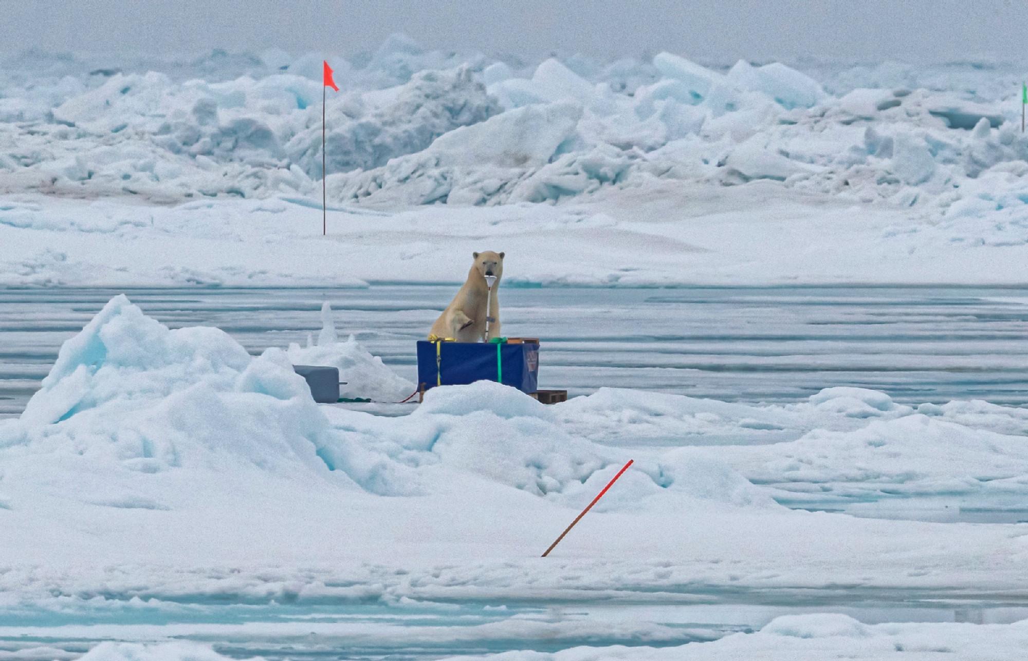 Eisbär-Besuche sind keine Seltenheit. Umso wichtiger ist die Wache auf der Brücke, um das größte Raubtier der Arktis rechtzeitig zu entdecken. Foto: Lianna Nixon, University of Colorado