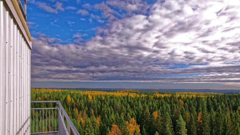 Boreale Wälder wie hier an der Messstation Hyytiäla in Finnland spielen eine wichtige Rolle für das Klima. Forschende der Universität Helsinki untersuchen diese Prozesse seit Jahren und gehören zu den weltweit für Experten auf diesem Gebiet. Foto: J
