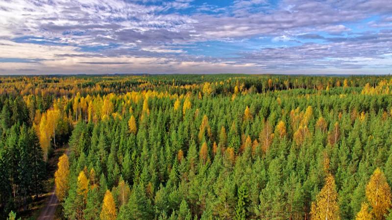 Boreale Wälder wie hier an der Messstation Hyytiäla in Finnland spielen eine wichtige Rolle für das Klima. Forschende der Universität Helsinki untersuchen diese Prozesse seit Jahren und gehören zu den weltweit für Experten. Foto: Juho Aalto
