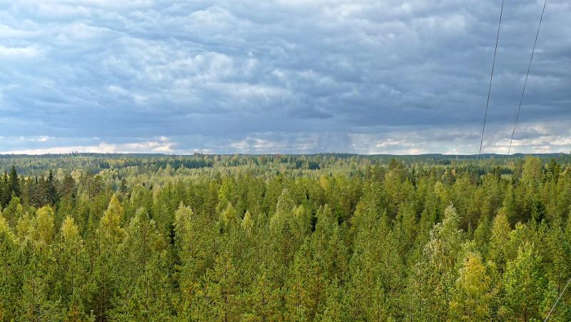 Auch die Station SMEAR II der Universität Helsinki im finnischen Hyytiäla (im Bild) lieferte Felddaten aus der Atmosphäre, welche die Laborbefunde unterstützen. Foto: Juho Aalto