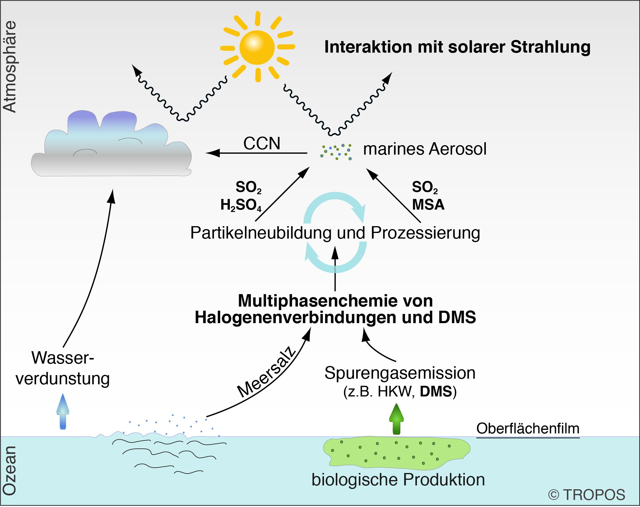 Umfassendste Studie zur atmosphärischen Oxidation des natürlichen Klimagases Dimethylsulfid veröffentlicht. Grafik: Erik Hans Hoffmann , TROPOS