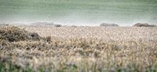 Die Wetterlagen 1302-07 seien vergleichbar mit der Wetteranomalie 2018, als in Kontinentaleuropa eine außergewöhnliche Hitze und Dürre herrschte, schreiben die Forschenden der Leibniz-Institute für Geschichte und Kultur des östlichen Europa (GWZO) und für Troposphärenforschung (TROPOS) im Fachjournal Climate of the Past. Foto: Tilo Arnhold, TROPOS